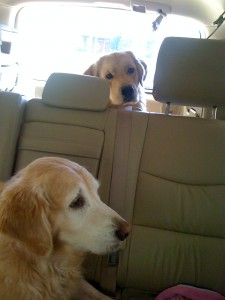Mackenzie and her brother Kobe going for a ride.